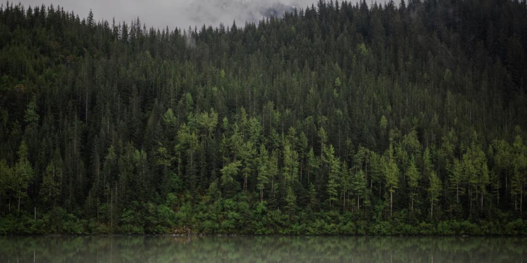 Шаблон презентации PowerPoint о природе - Forest